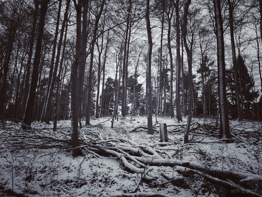 Wandern im Söhrer Wald