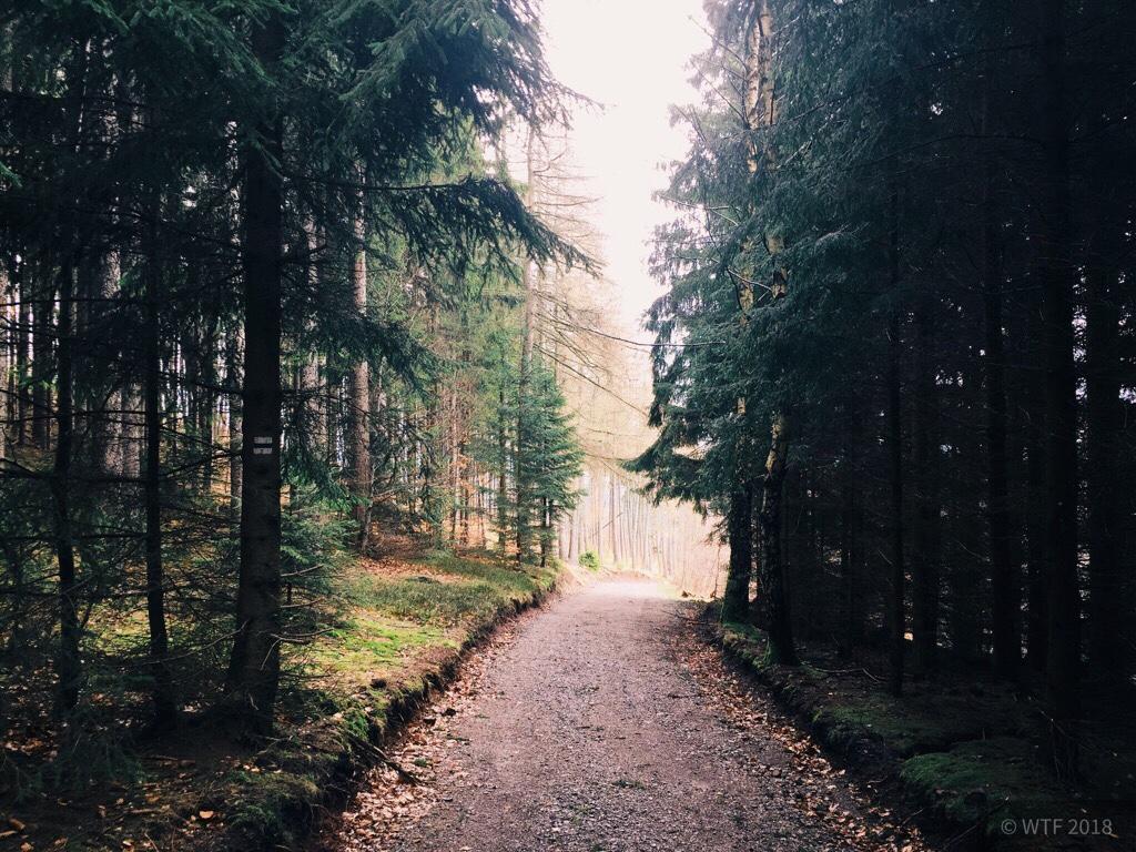 Ilmenau und Thüringer Wald
