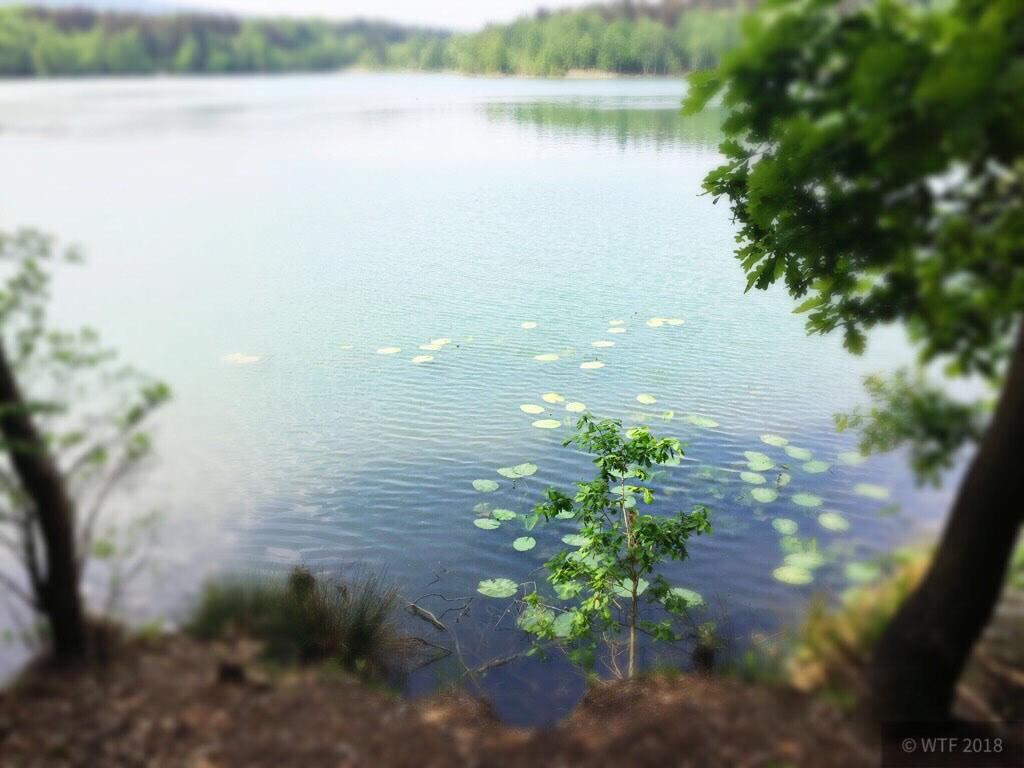 Duinger Seen -> Bruchsee
