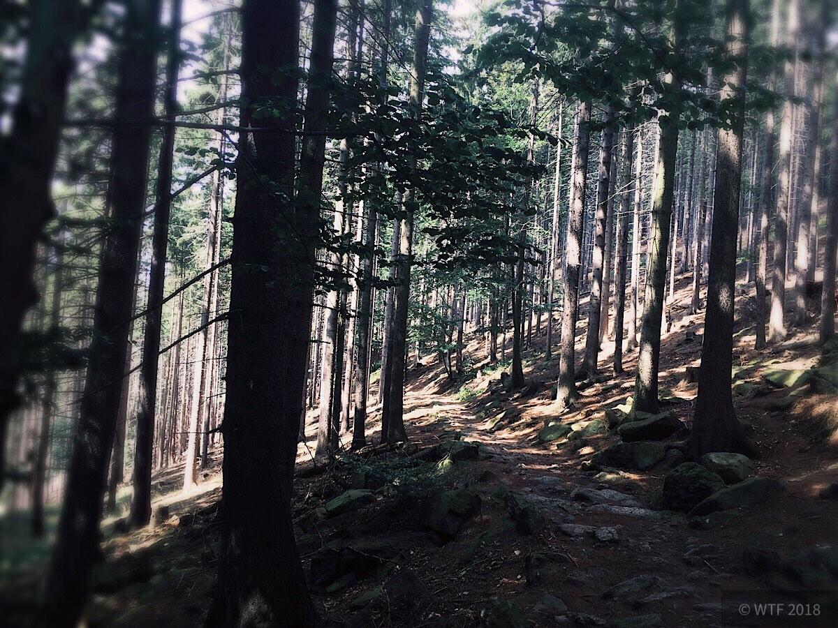 Wanderung durchs Ilsetal